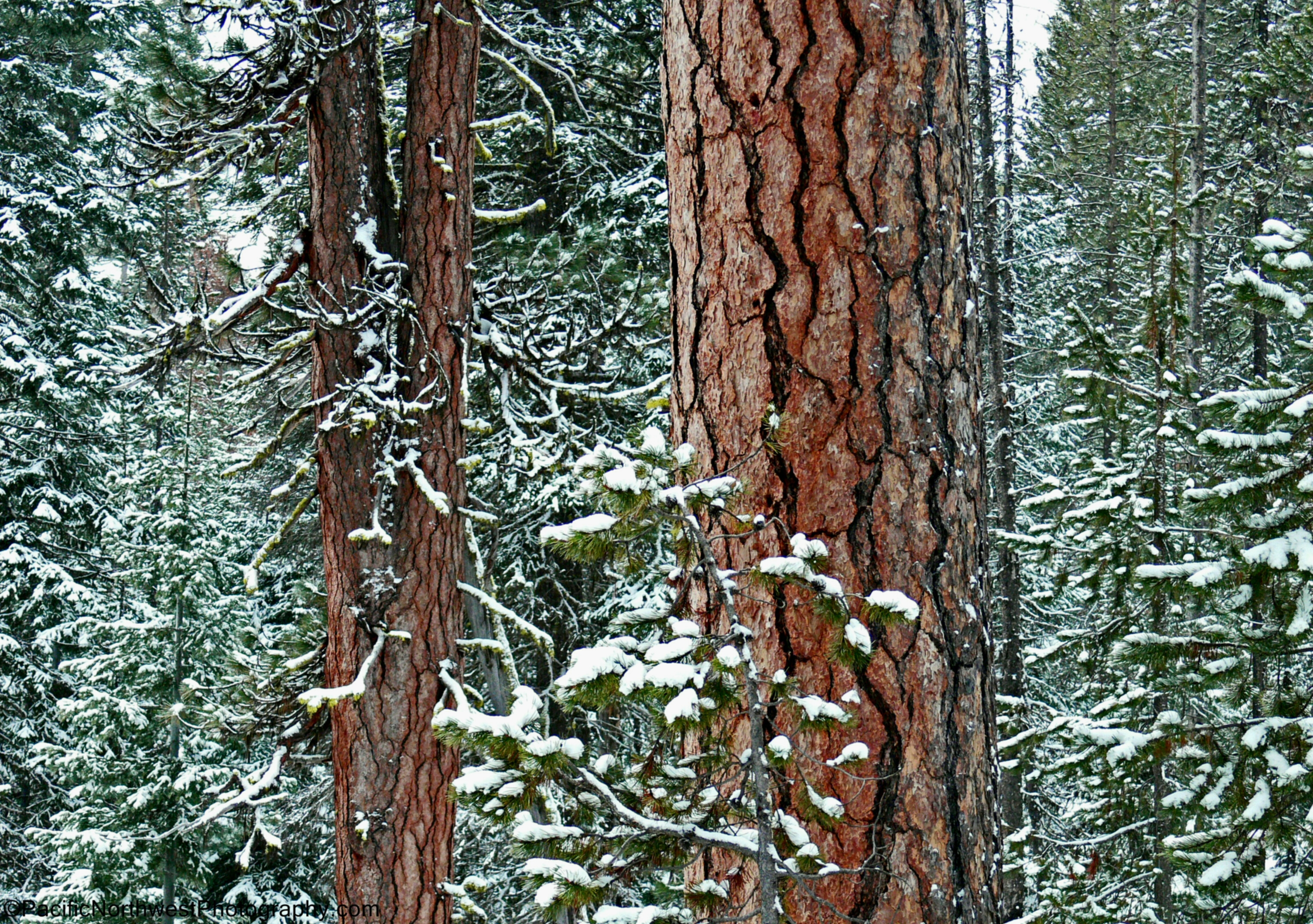 Winter in the Deschutes National Forest