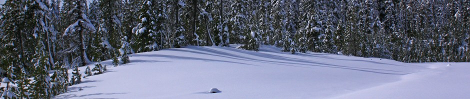Trees and fresh powder