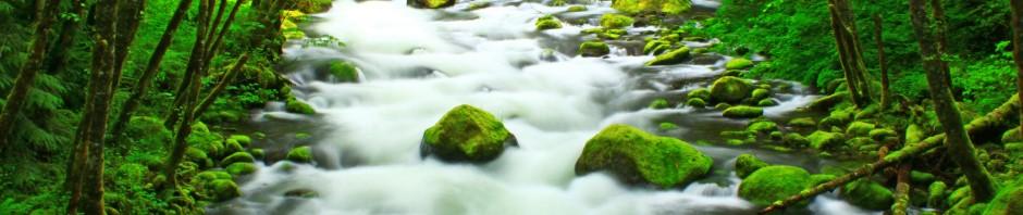 Herman Creek in the Columbia Gorge, OR