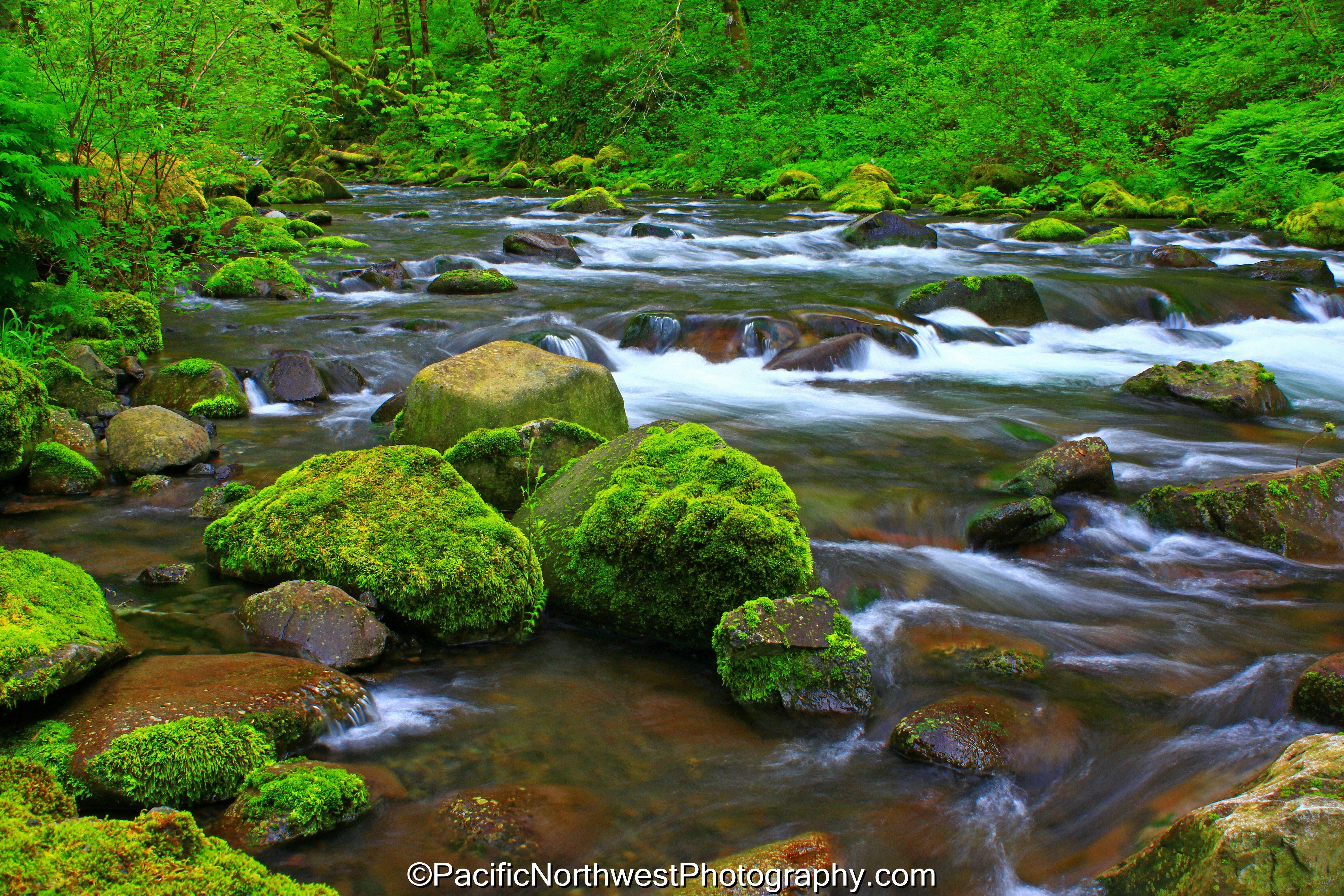 Tanner Creek below Wahclella Falls