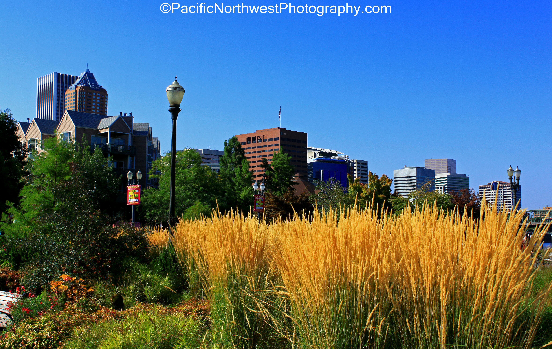 downtown Portland near the park