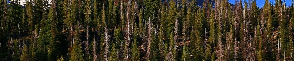 Wildlife in Central Oregon