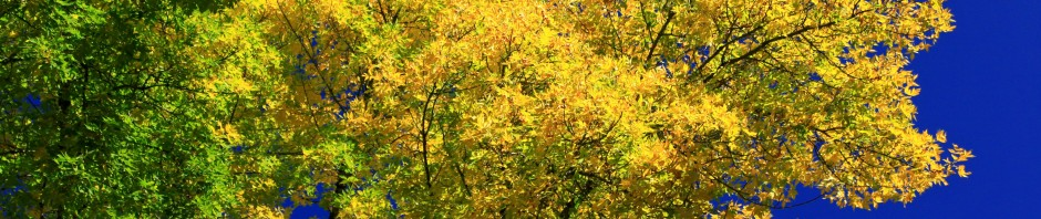 Fall foliage at Champoeg State Heritage Area, OR