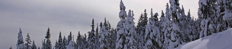 Winter snow, 2011