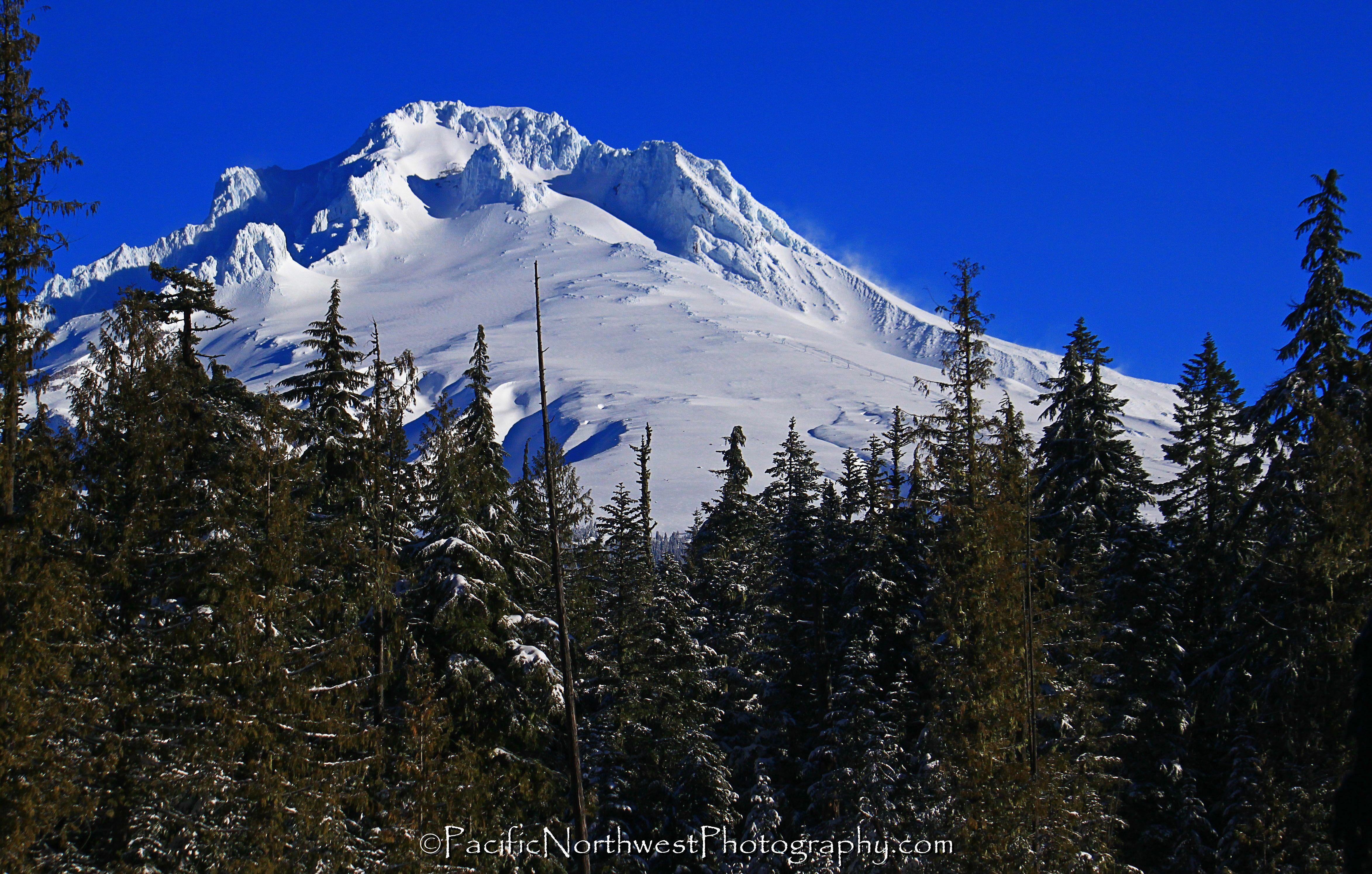 Mt. Hood and trees