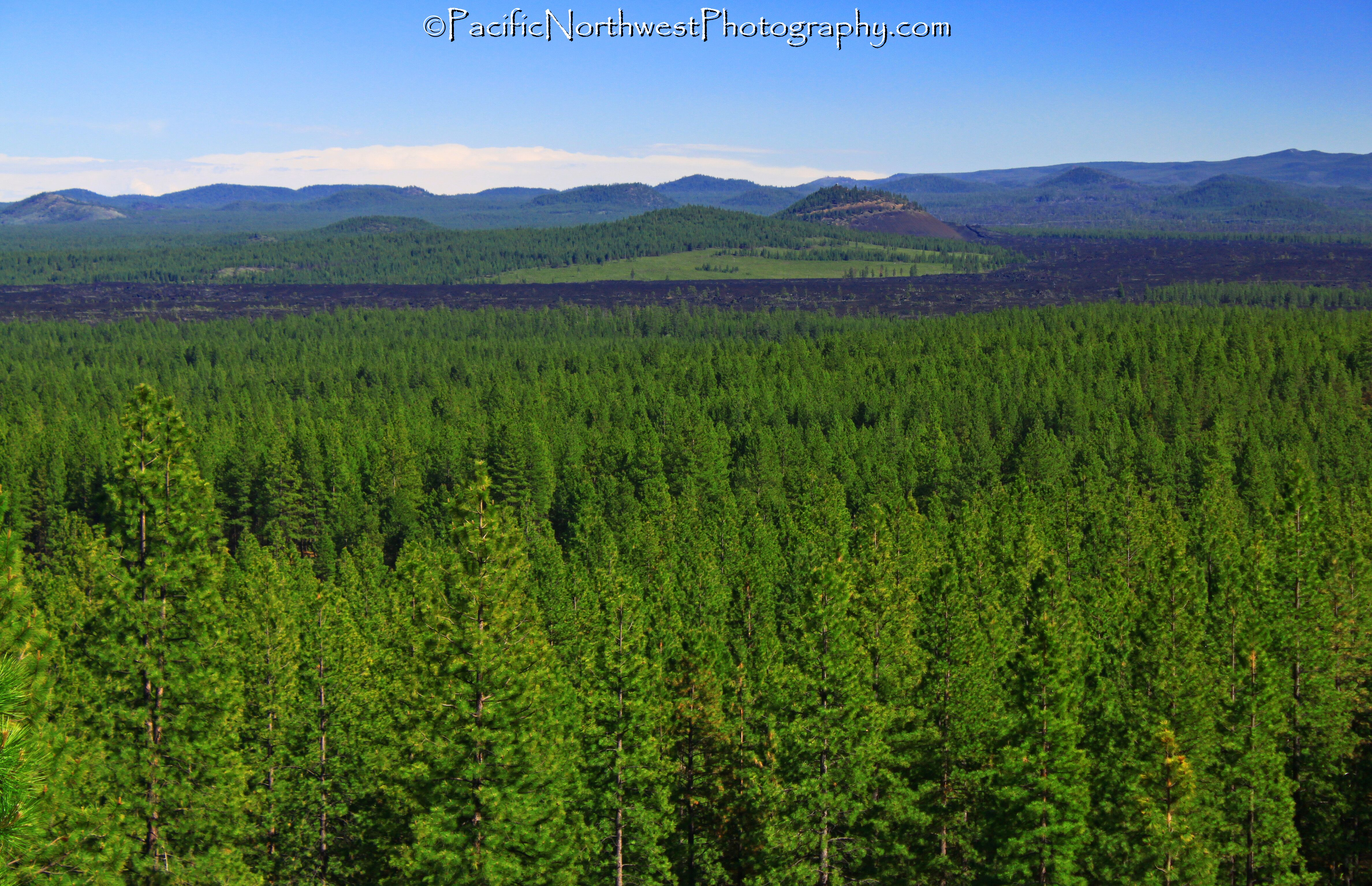 Forest, desert, lava fields and mountains