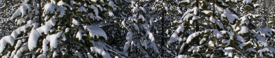 Snow flocked trees in the Oregon Cascades, OR