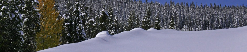 Fresh powder in the Cascade mountains