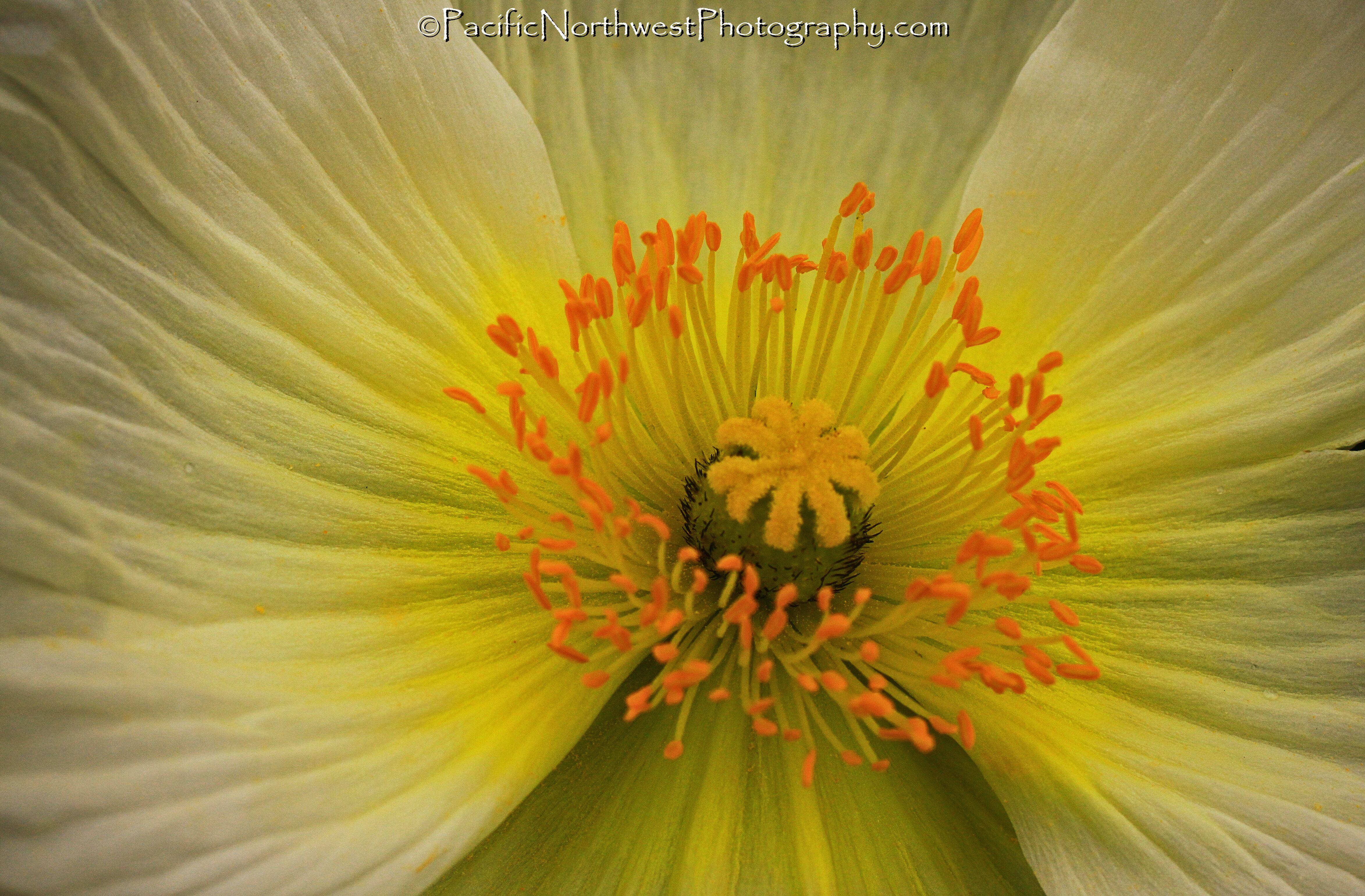 Rare white and yellow
