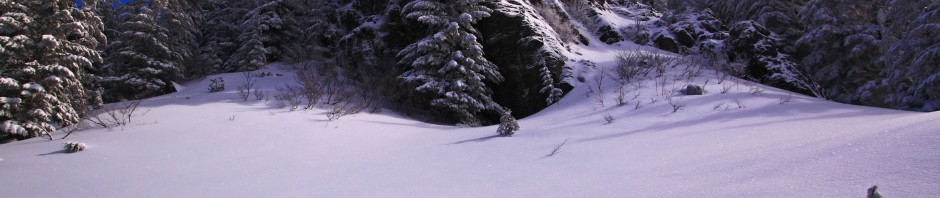 trees, cliff, blue skies and powder
