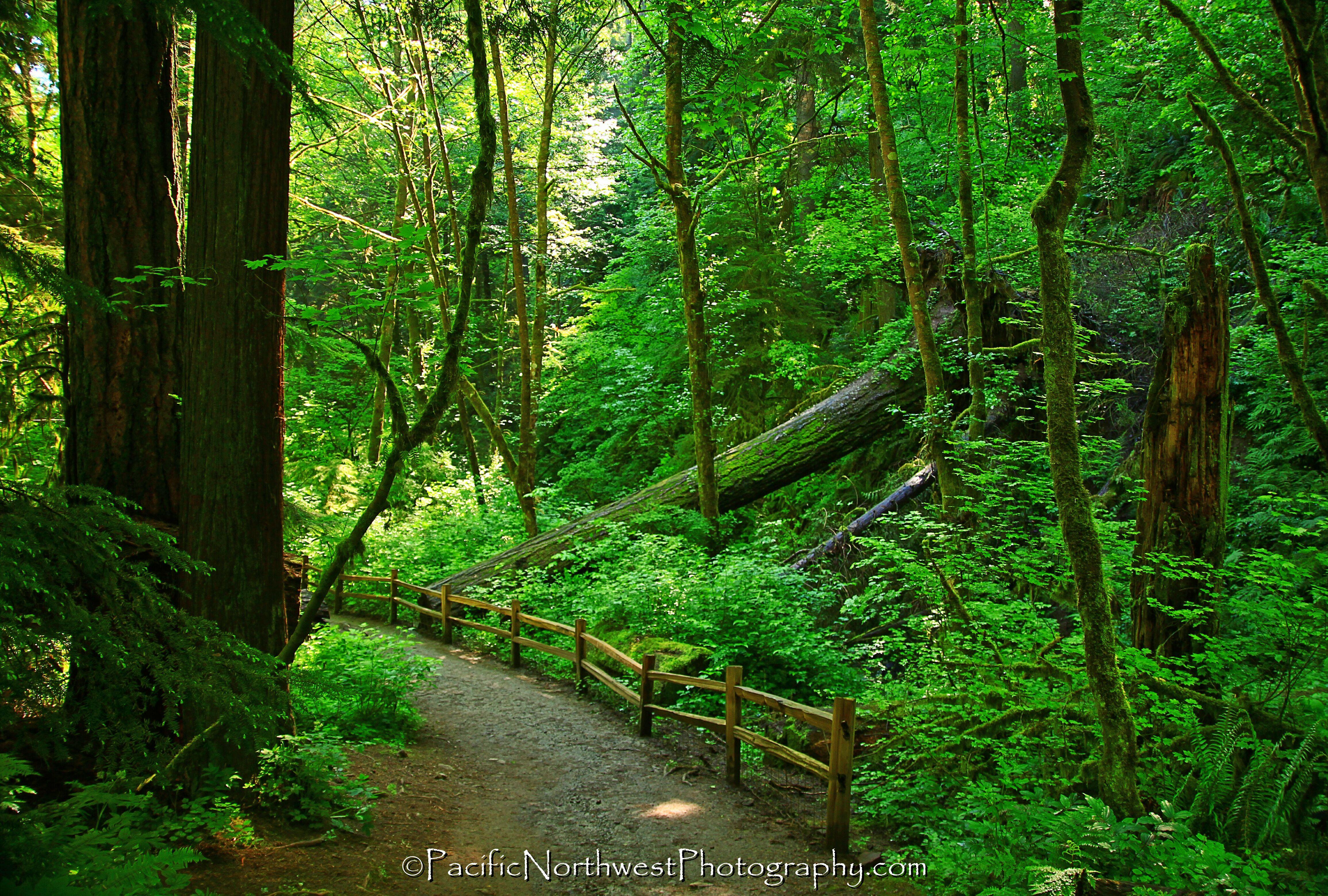 Forest-Park.jpg