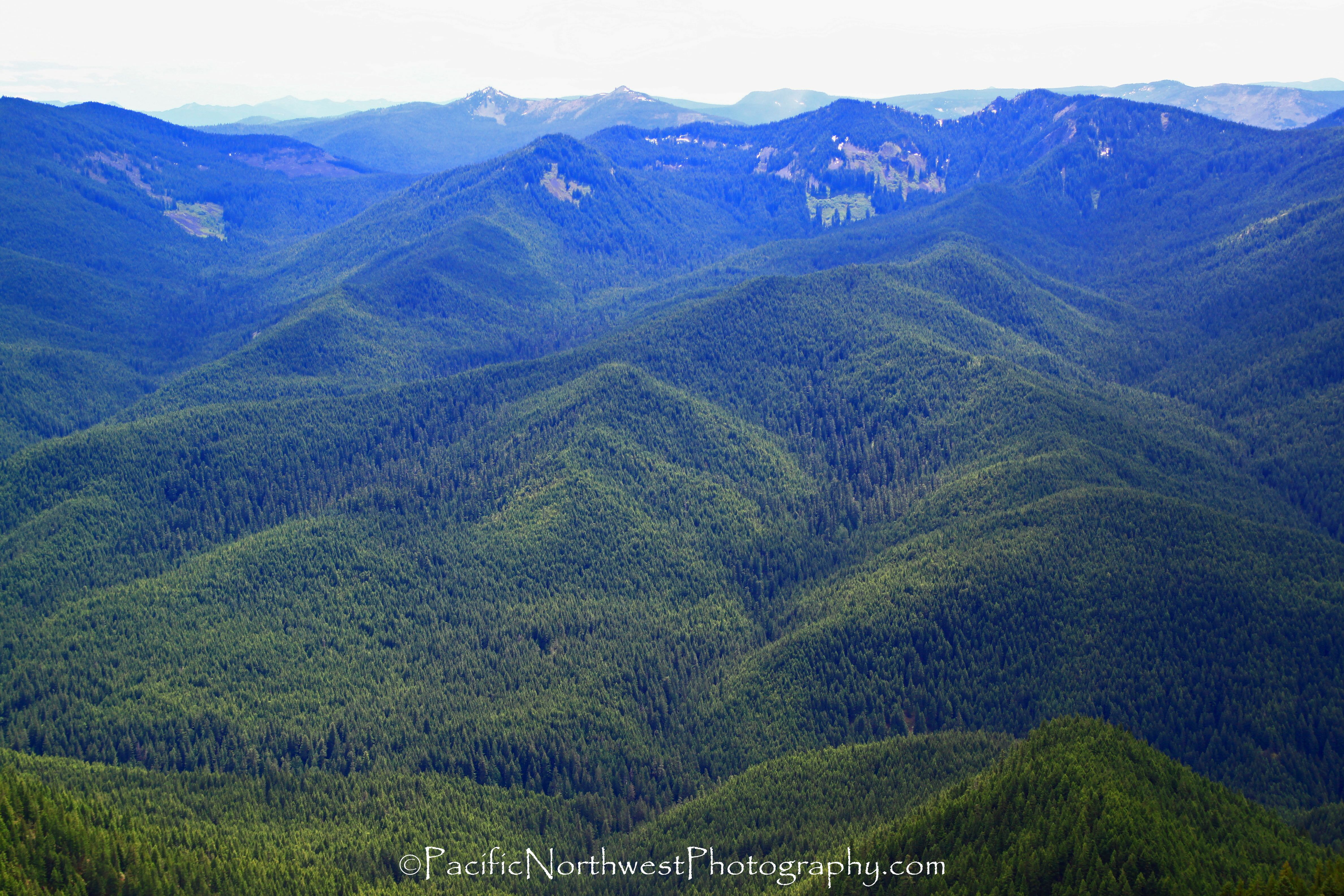 Salmon-Huckleberry Forest, Oregon